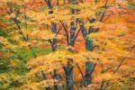 Lynne Adams Trees 02